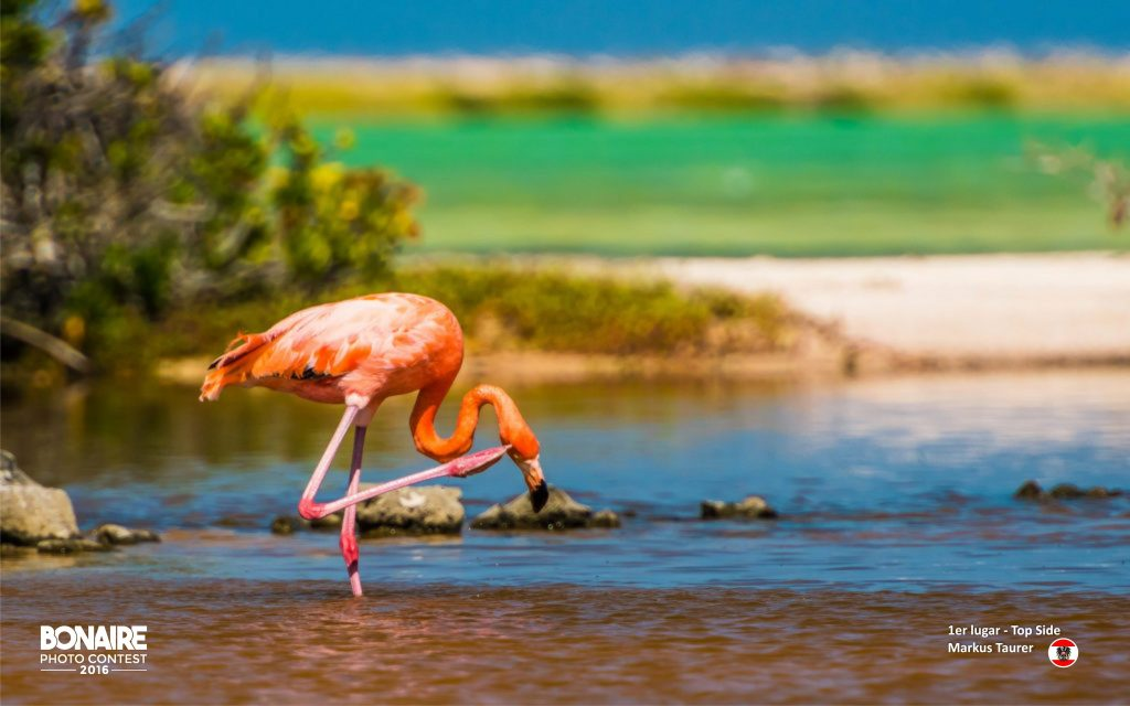 Winners chosen in Bonaire Photo Contest 2016