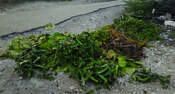 Garden waste increasingly dumped in public spaces