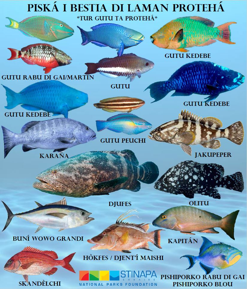 Stinapa Gives Information About Protected Marine Species