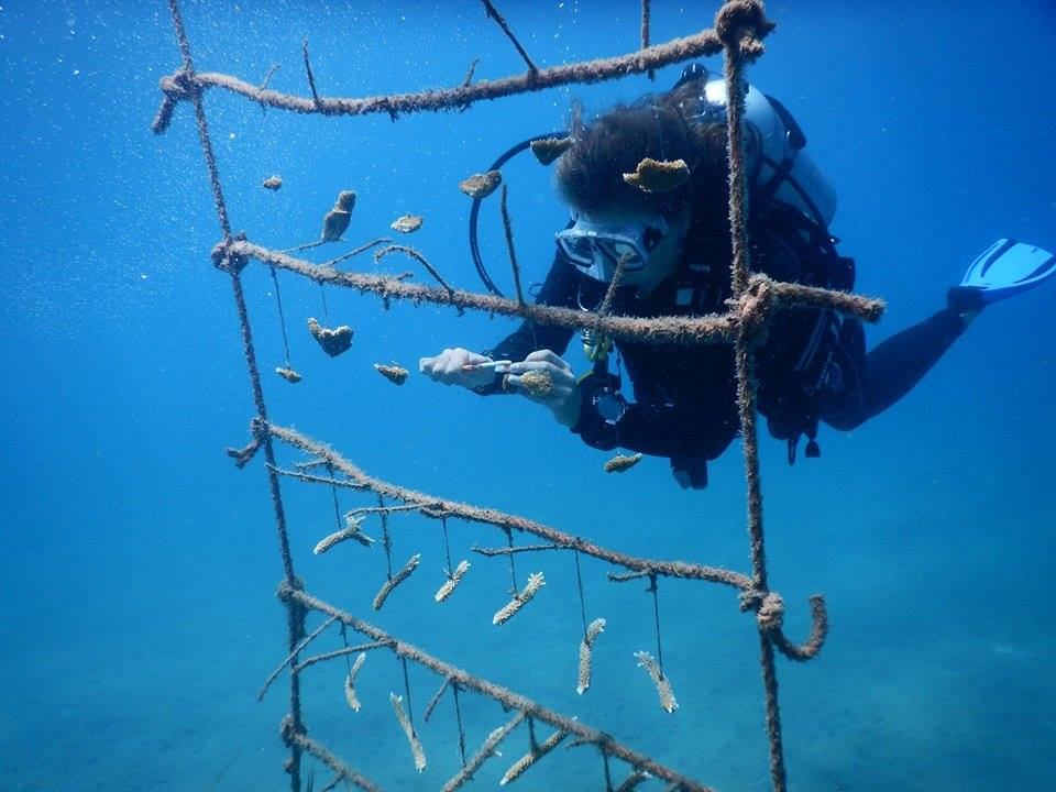 Did you know that STENAPA St. Eustatius are growing their own coral?