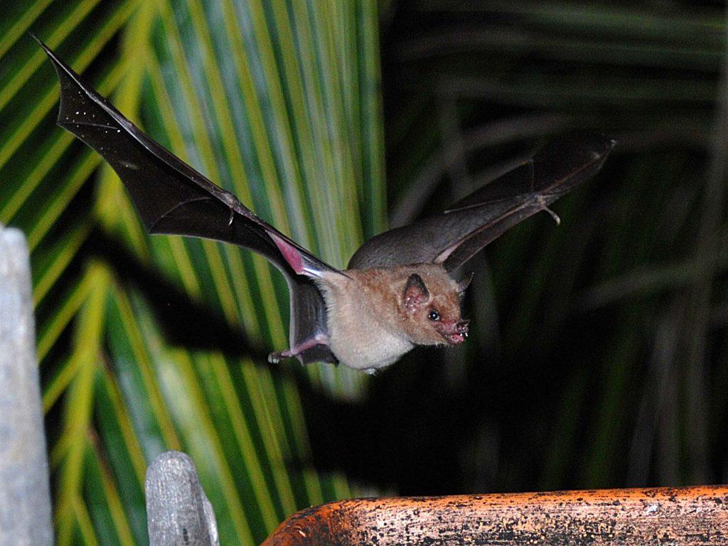 STINAPA bat night