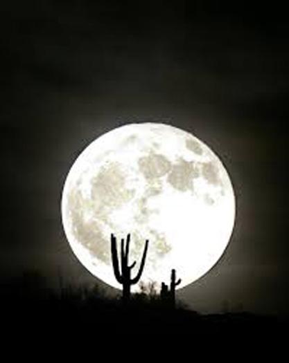 Full moon walk at the Washington Slagbaai National Park