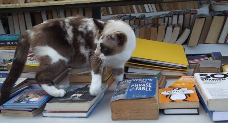 Animal shelter book market