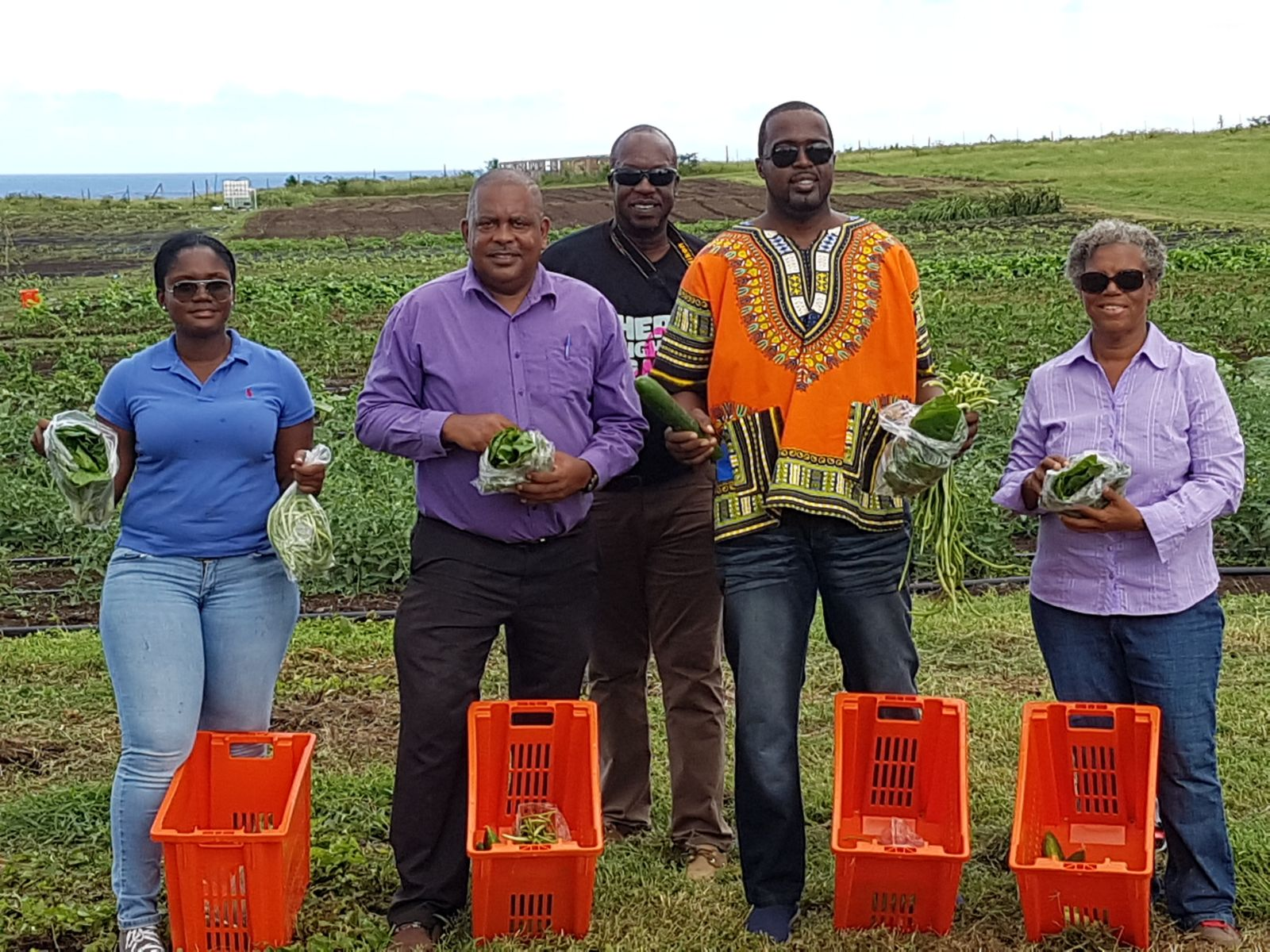 First harvest Made in Statia