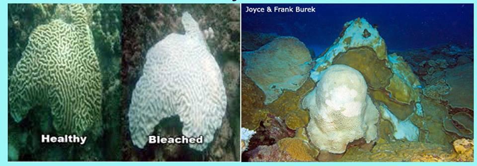 Status Coral Bleaching Bonaire