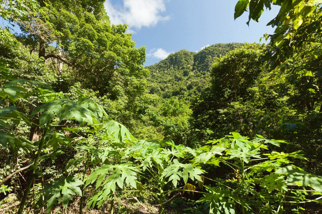 Quill Crater Trail Sint Eustatius Ready to Welcome Hikers Again