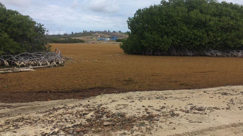 lagun sargassum