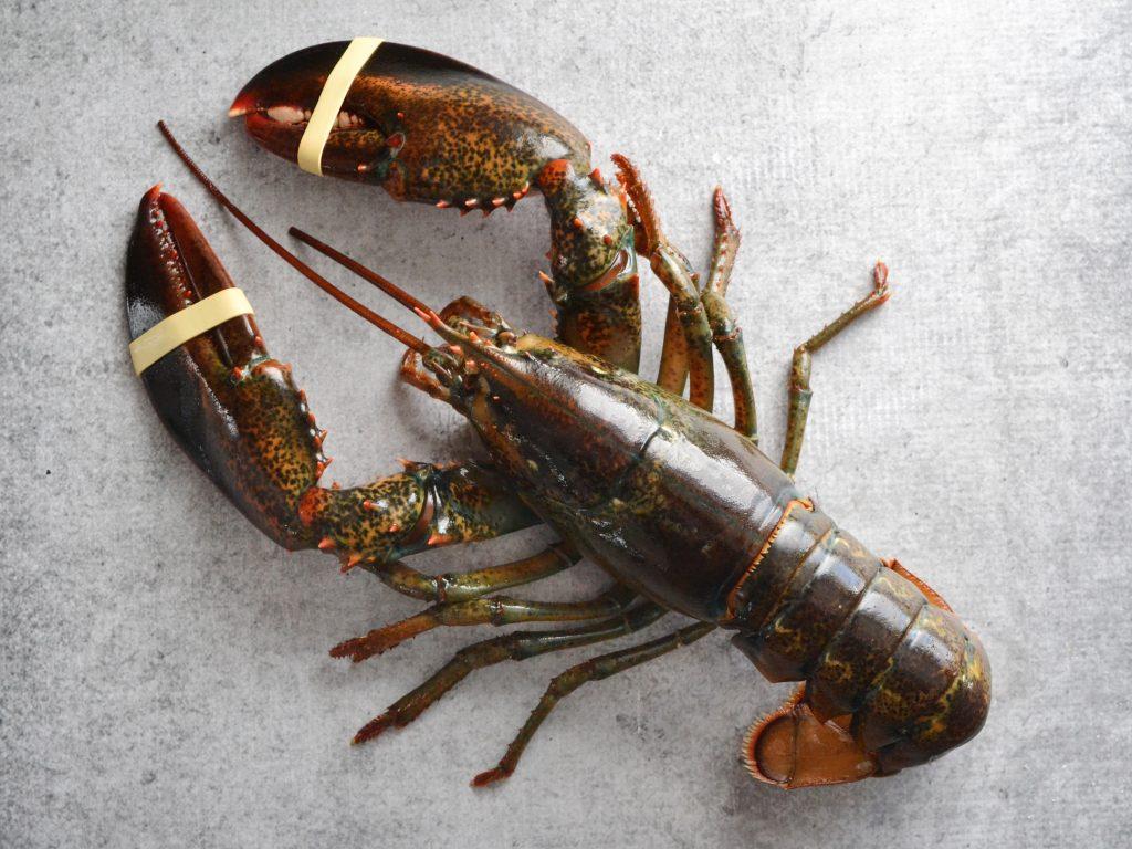Stinapa: No eating of Fresh Lobster Outside Season