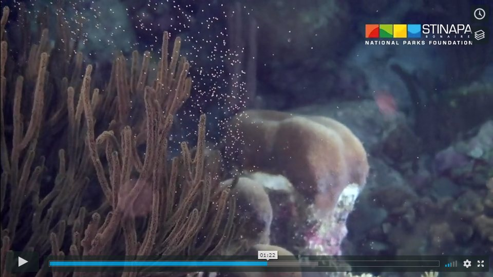 Coral spawning, a magical night on Bonaire's reef – all captured on film