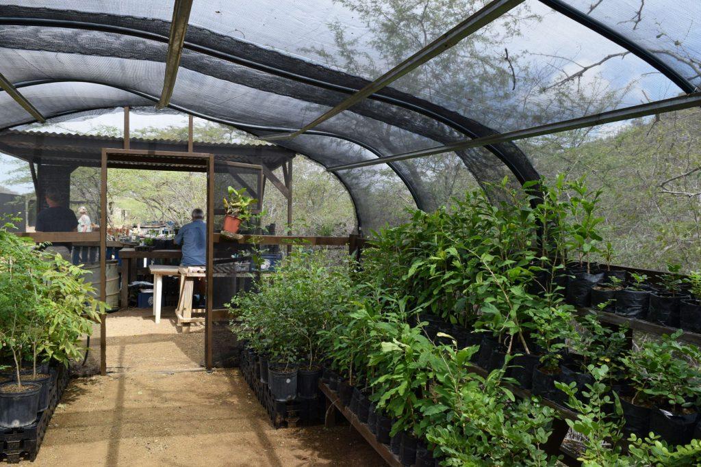 Greenhouse Echo