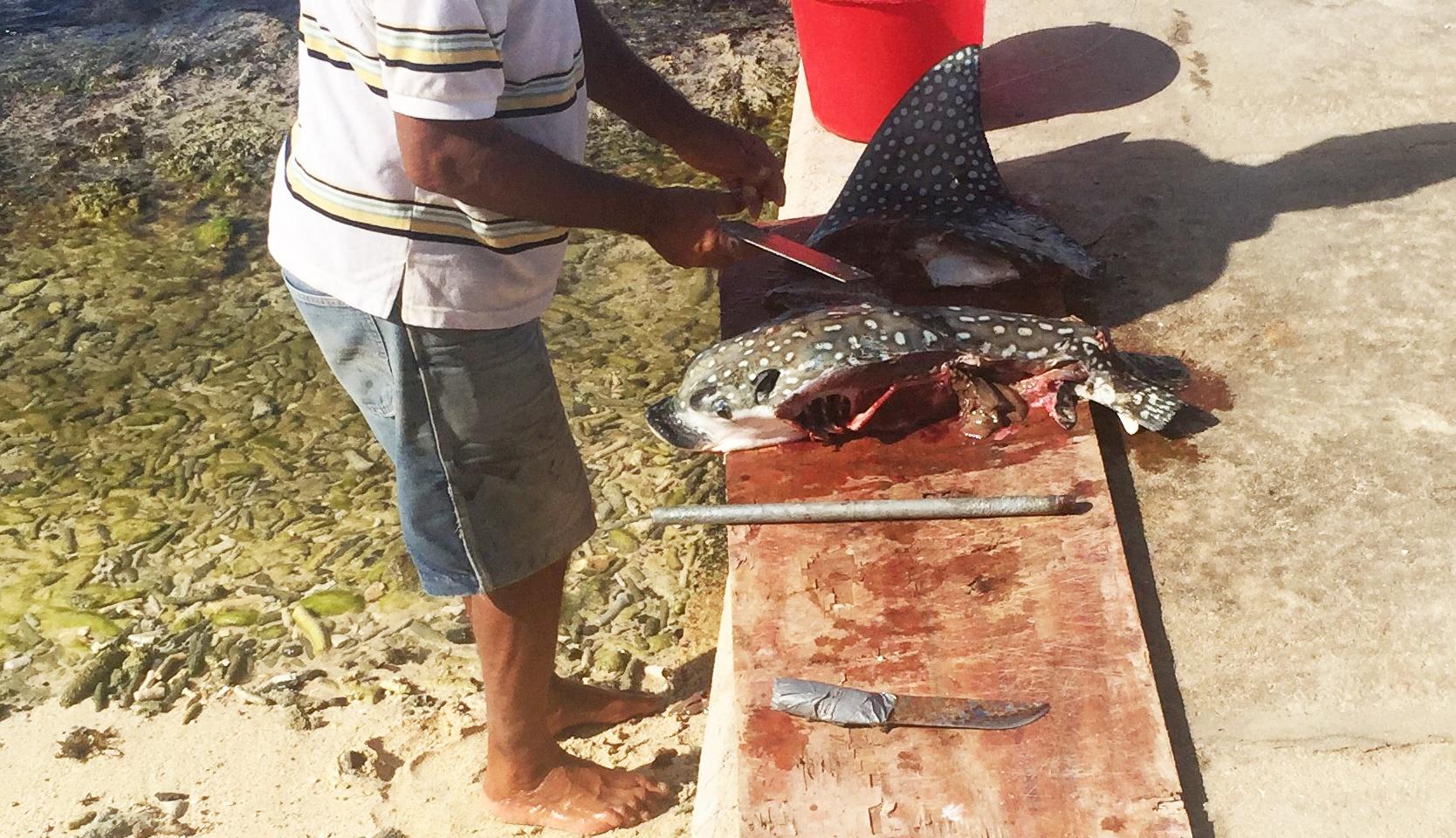Protected Species Caught by Venezuelan Fisherman