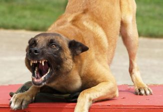 Police Office Bonaire forced to shoot agressive dog