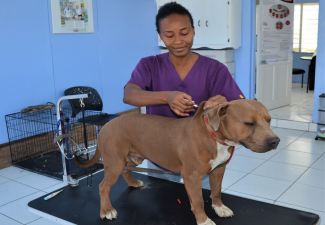 Veterinary Services Statia Continues Dog Micro chipping