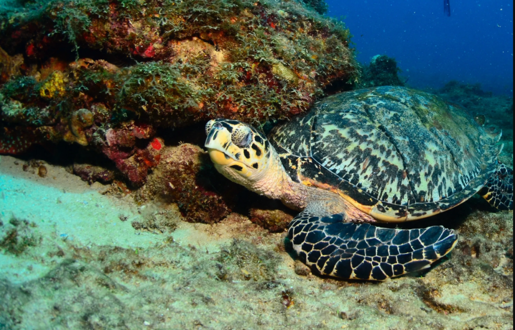 Nature Foundation Sint Maarten reminder to protect sea turtles