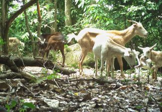 Sneek to Knops: 'The Goat Problem is Yours Now'