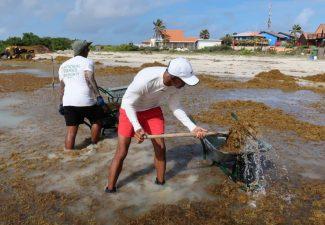 Large-scale Sargassum Influx Threatens Bonaire's costs again