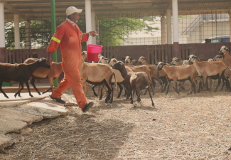 LVV with Info Session on Professional Goat Farming