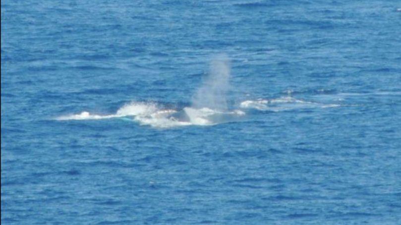 Whale Sightings on Statia