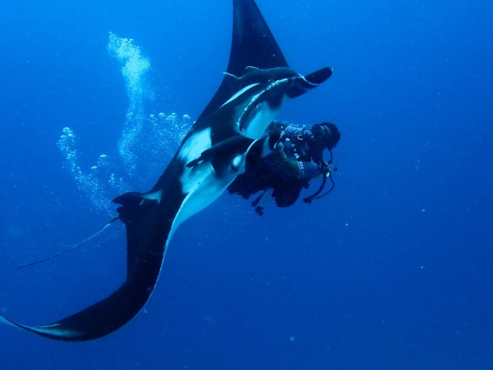 Divemaster 'Spider' saves Manta from fishing lines and gets a 'thank-you'