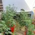 Hemp plants seized on Saba