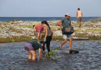 Volunteers plant 425 additional Mangrove Trees in Bonaire